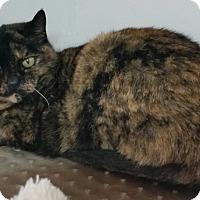 Adopt A Pet :: Natalia - Diamond Springs, CA