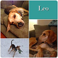 Adopt A Pet :: Leo ADOPTED - Ontario, ON