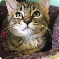 Adopt A Pet :: Sebastian - Philadelphia, PA