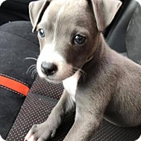 Adopt A Pet :: Nora - Marlton, NJ