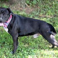 Adopt A Pet :: Drake - Dalton, GA