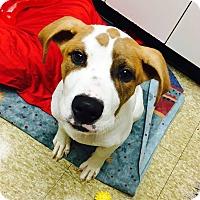 Adopt A Pet :: KJ - Adoption Pending! - West Bloomfield, MI