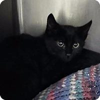 Adopt A Pet :: Magic - Henderson, KY
