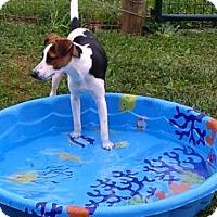 Adopt A Pet :: Jaxon - Bristol, TN