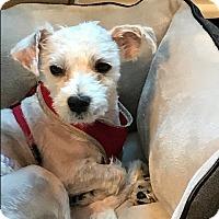 Adopt A Pet :: Monty - Long Beach, NY