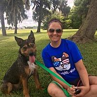 Adopt A Pet :: Brewster - Darien, CT