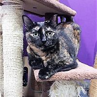 Adopt A Pet :: Cola (& Diva) - Herndon, VA