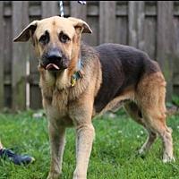 Adopt A Pet :: Harvey - Hillside, IL