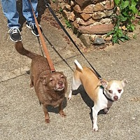 Adopt A Pet :: Peanut and Cocomo - Barnegat, NJ