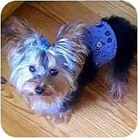 Adopt A Pet :: Dior - West Palm Beach, FL