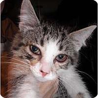 Adopt A Pet :: Soda - Warren, MI