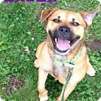Adopt A Pet :: Layla - Laingsburg, MI