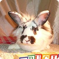 Adopt A Pet :: Drucilla - Newport, DE