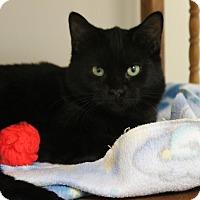 Adopt A Pet :: Hogan - Medina, OH