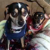 Adopt A Pet :: Shawn - Clayton, CA