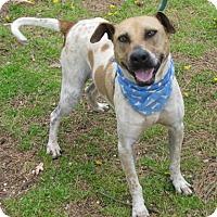 Adopt A Pet :: Jeffie - Voorhees, NJ