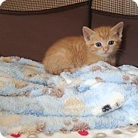 Adopt A Pet :: Wheaty - Turnersville, NJ