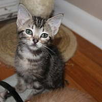 Adopt A Pet :: Jude - Jackson, MS