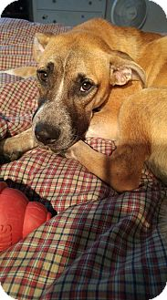 Shepherd (Unknown Type) Mix Dog for adoption in kennebunkport, Maine - DeeDee - in Maine