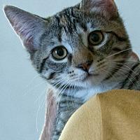 Adopt A Pet :: Diva - Prescott, AZ