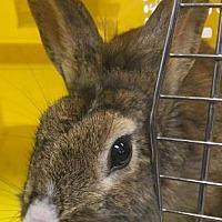 Adopt A Pet :: yoko Ono - Edmonton, AB