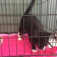 Adopt A Pet :: Lucille - Bedford, IN