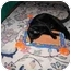 Photo 3 - Domestic Shorthair Cat for adoption in Proctor, Minnesota - Boomerang