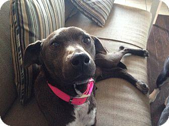 Retriever (Unknown Type) Mix Dog for adoption in Portland, Maine - Jackie