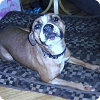 Adopt A Pet :: Brulee - Medicine Hat, AB