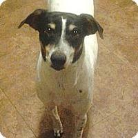 Adopt A Pet :: Rois - Jacksonville, FL