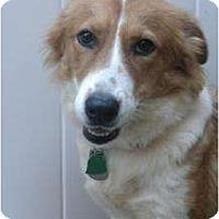 Adopt A Pet :: Baylee - Douglas, MA