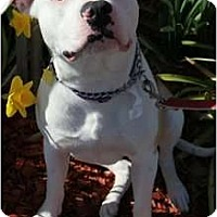 Adopt A Pet :: Billy - Auburn, CA