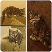 Adopt A Pet :: Glory - Modesto, CA