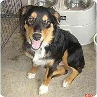 Adopt A Pet :: Beau - Orlando, FL
