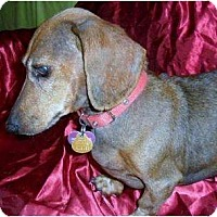 Adopt A Pet :: Herc - Vale, OR