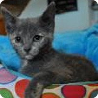 Adopt A Pet :: Sammi - Port Republic, MD