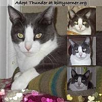 Adopt A Pet :: Thunder - Liverpool, NY