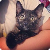 Adopt A Pet :: Cinnamon - Raleigh, NC