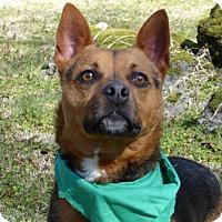 Adopt A Pet :: Gyra - Mocksville, NC
