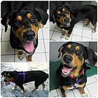 Adopt A Pet :: Jefffrey - Forked River, NJ
