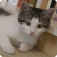 Adopt A Pet :: Minnie - Covington, KY