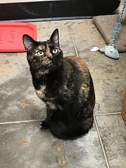 Domestic Shorthair Cat for adoption in Capshaw, Alabama - Chitlin
