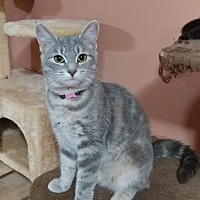 Adopt A Pet :: Celeste - Lexington, NC