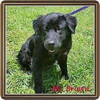 Adopt A Pet :: Mr. Brown - Osteen, FL