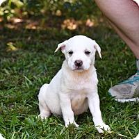 Adopt A Pet :: Ira - South Dennis, MA
