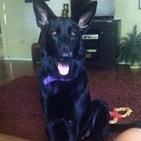 Adopt A Pet :: REINA - BROOKSVILLE, FL