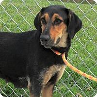 Adopt A Pet :: Evie - Elmwood Park, NJ