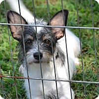 Adopt A Pet :: Skippy - Pikeville, MD