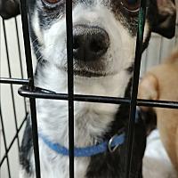Adopt A Pet :: Denny - Ogden, UT