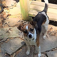 Adopt A Pet :: Buster - Rochester, NY